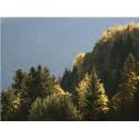Rencontres, Faune et flore des Pyrénées