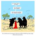 Dernières nouvelles de l'ours, et autres amis à poils, plumes ou écailles